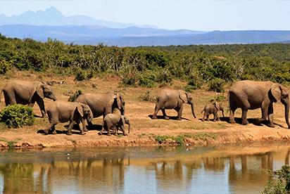 Agenzia Viaggi in 3D - Africa